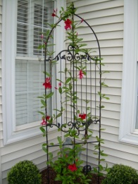 Wire trellis with red flowers